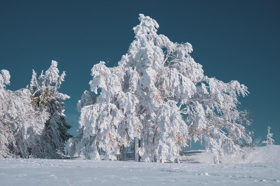 Invernale, Albero, Faggio, Nevoso, Inverno, Freddo