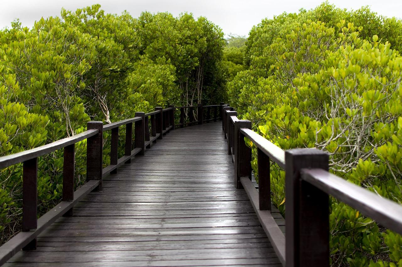 Wood Bridge Mangrove Forest - Free photo on Pixabay