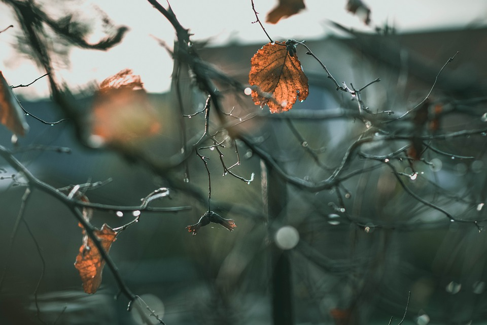Aesthetic, Late Autumn, Rain, Nature, Drop Of Water