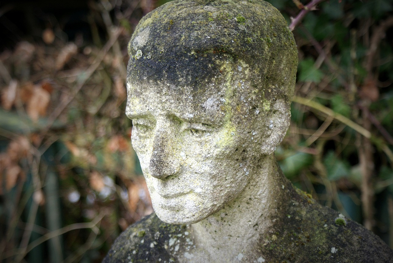 рядков свеклы каменное лицо фото лук чистить