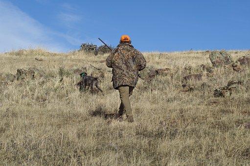 Hunting, Hunter, Hunting Dog, Gun