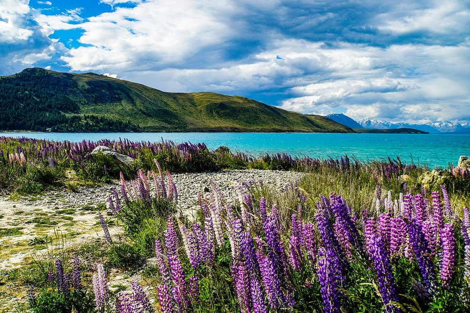 New Zealand, South, Island, Tekapo, Lake, Water, Blue