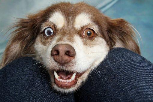 Hond, Puppy, Dierlijke, Bruin Wit Hond