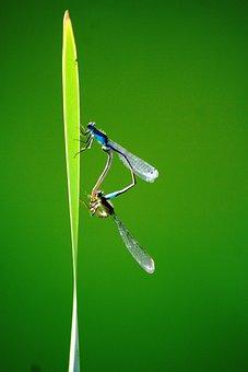Dragonflies,