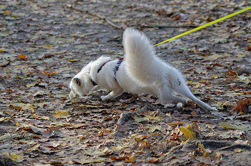 Dog, Pet, Canine, Fur, White, Line