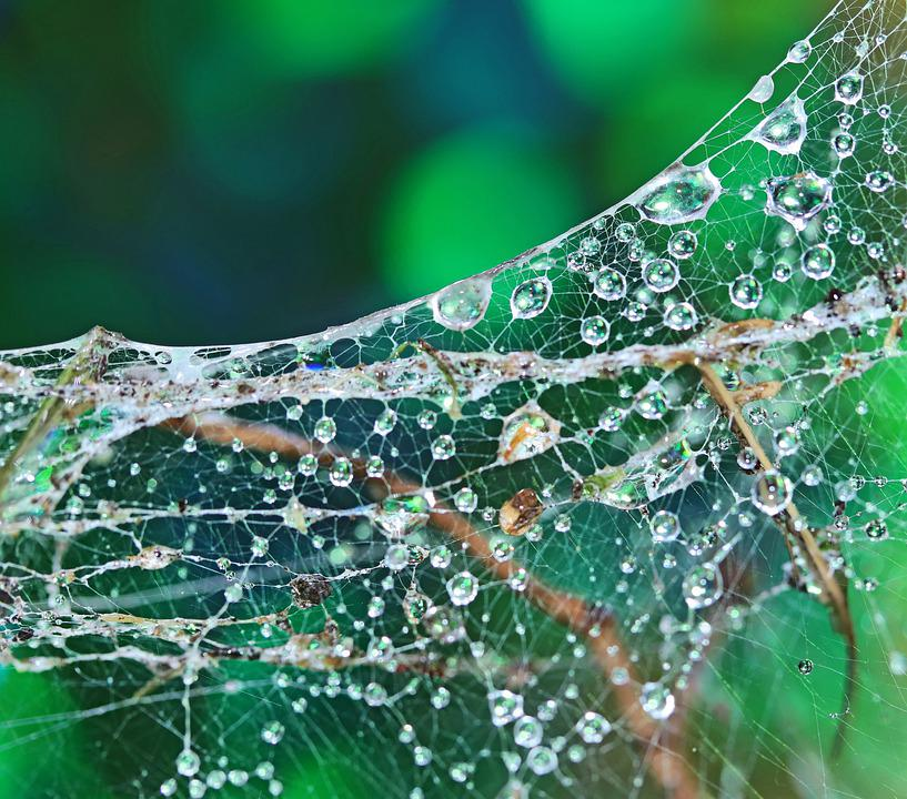 Cobwebs, Water Drops, Refraction, Green, Bokeh, Texture