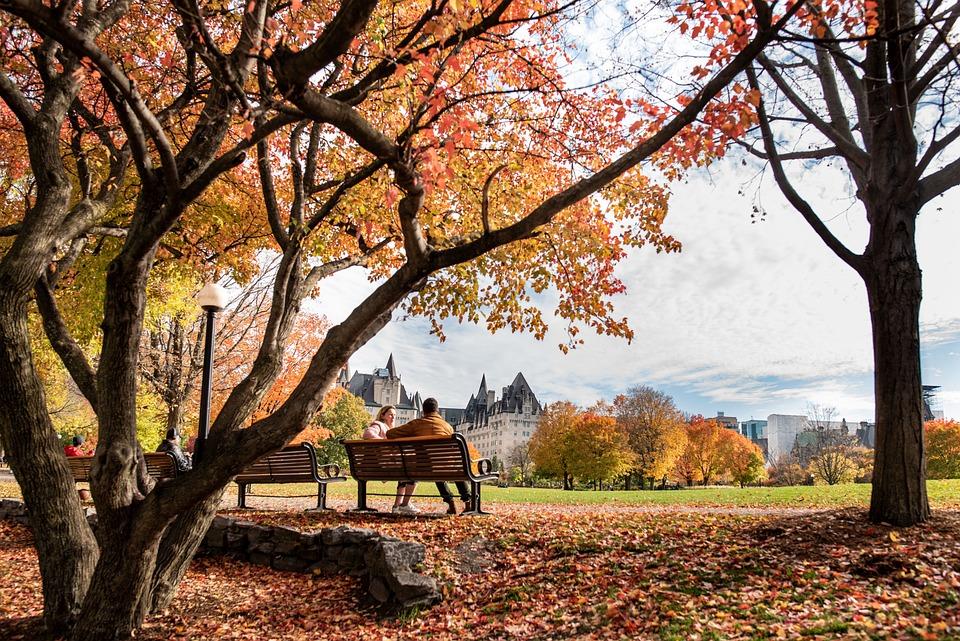 秋, 公園, ベンチ, カップル, 木, 屋外, オタワ, カナダ, シーズン, カラフルです, 10月