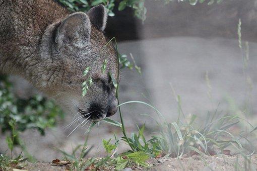 100+ kostenlose Puma und Natur Bilder Pixabay