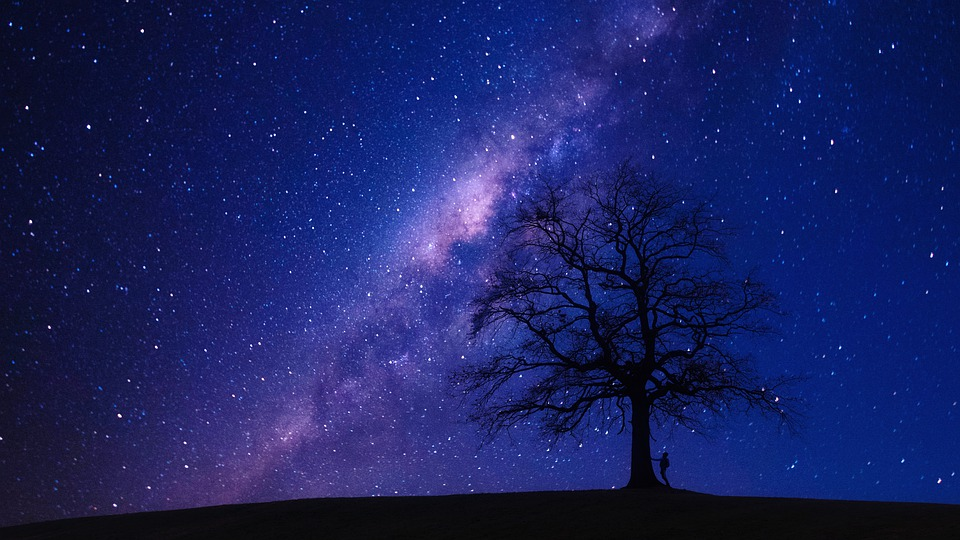 Pohon, Malam, Bintang, Galaksi, Pria, Pengembara