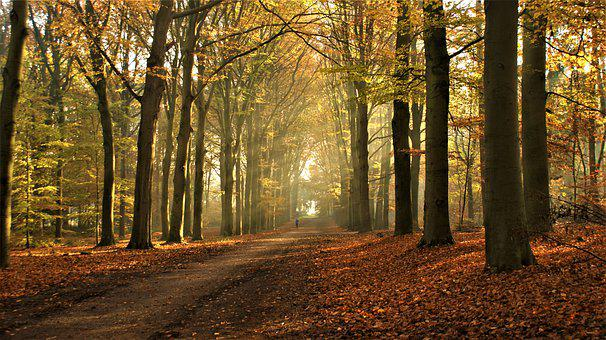 Sunlight, Autumn, Nature, Forest