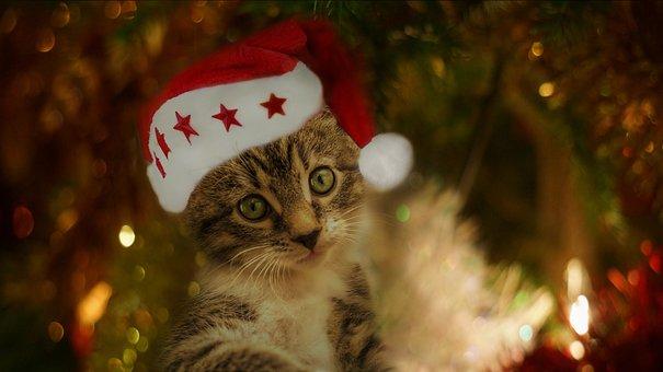 Cat, Small, Mackerel, Christmas