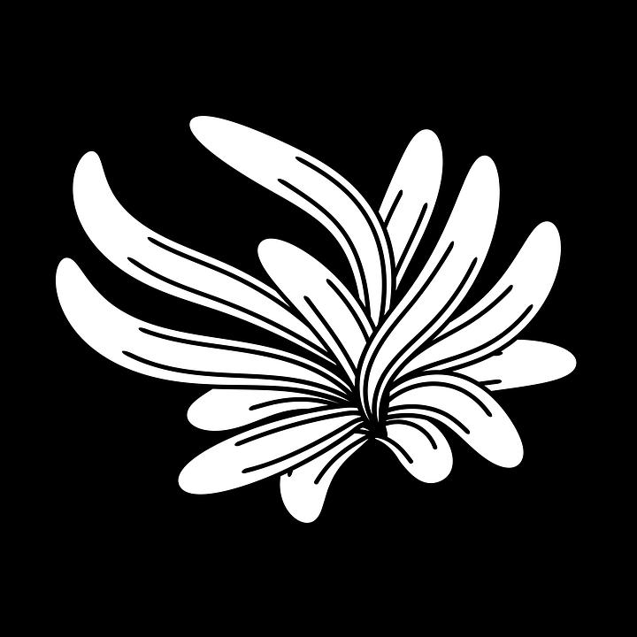 Boya Fircasi Cicek Buket Pixabay De Ucretsiz Resim
