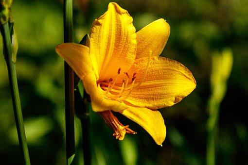 De 1 000 Photos Et Images De Fleur De Lys Pixabay