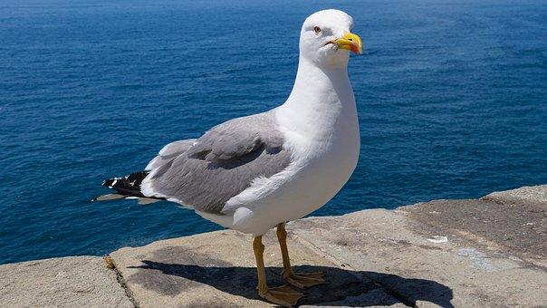 velikost velkého ptáka