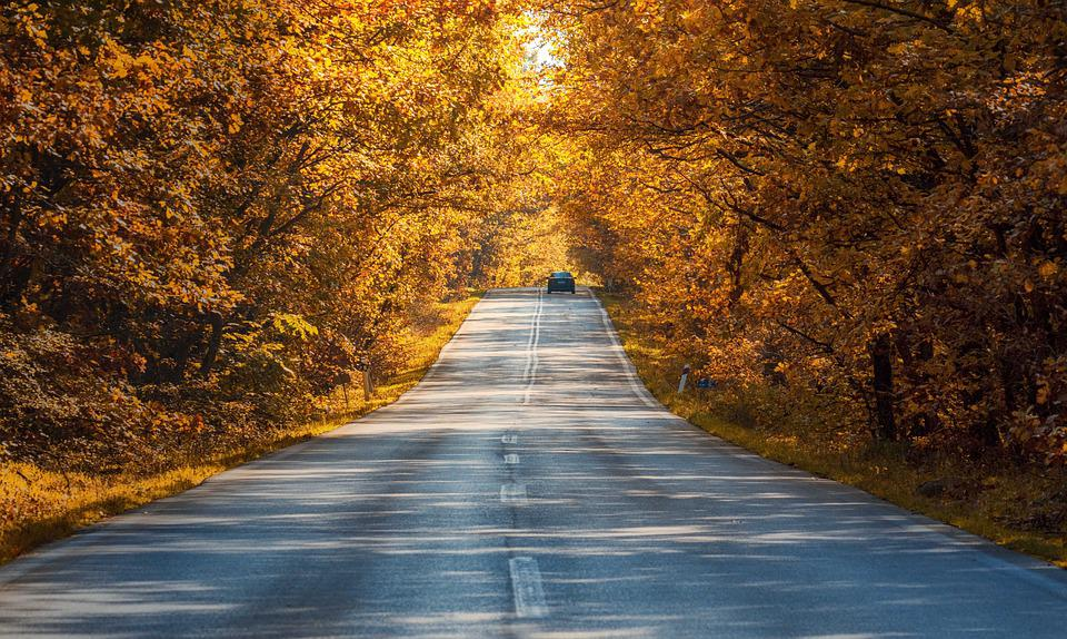 Road, Fantasy, Autumn, Trees, Kalampaka, Leaves