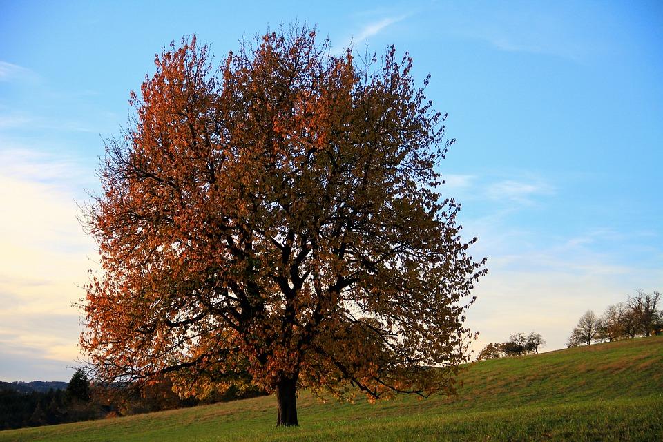 木, 自然, 風景, 秋, 風光明媚です, 牧草地, 葉, カラフル