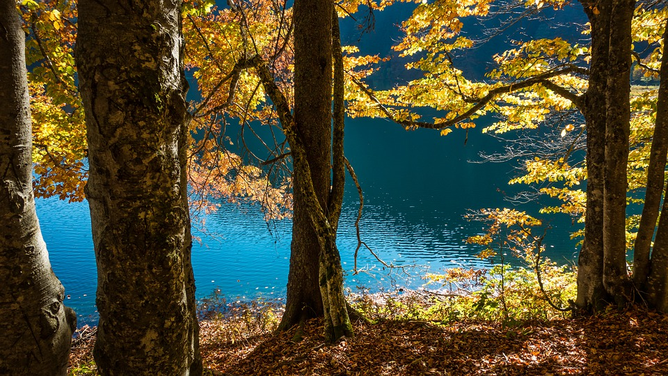 Fall, Trees, Forest, Nature, Landscape, Leaves, Mood
