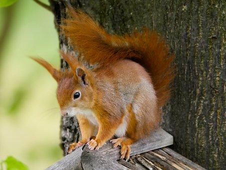 36 bilder eichhörnchen zum ausdrucken - besten bilder von