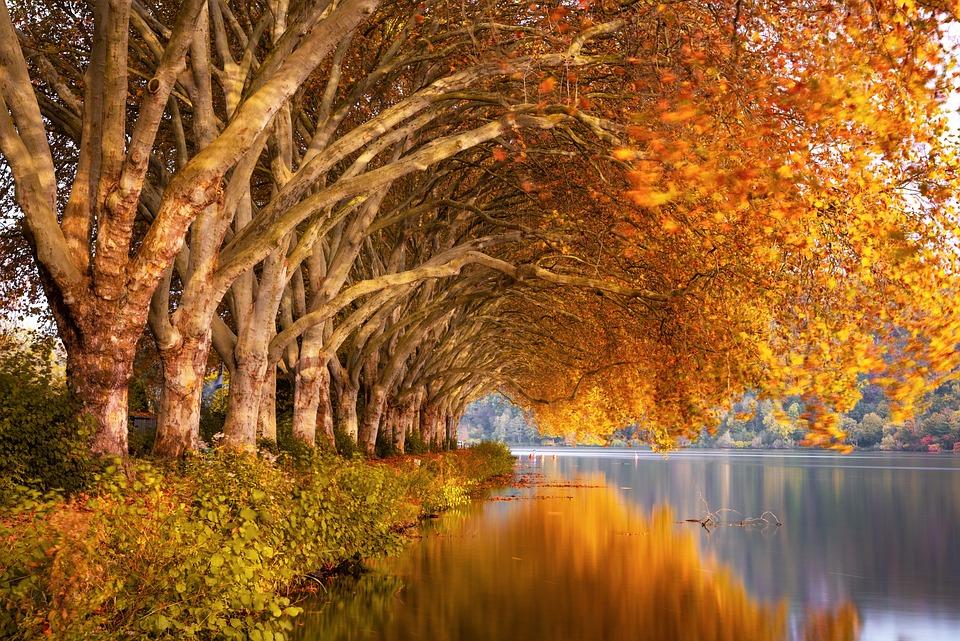 Fall, Lake, Plane Trees, Nature, Landscape, Water, Mood