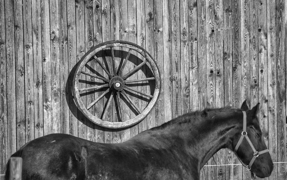 Cavallo, Schiena Del Cavallo, Ruota Di Legno