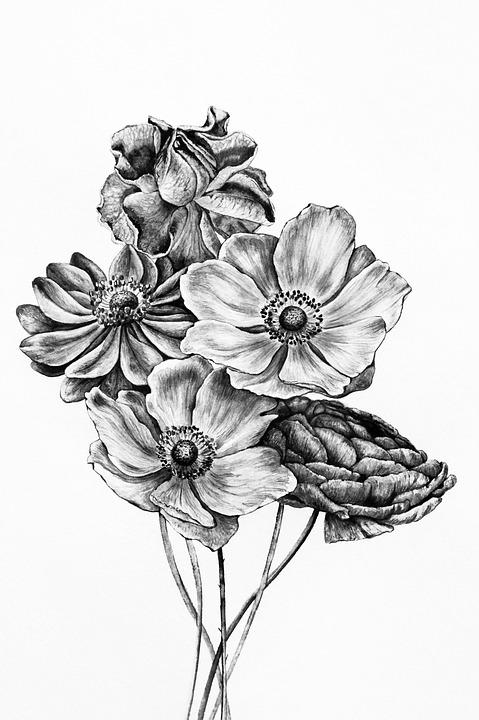 Noir Et Blanc Bouquet De Image Gratuite Sur Pixabay