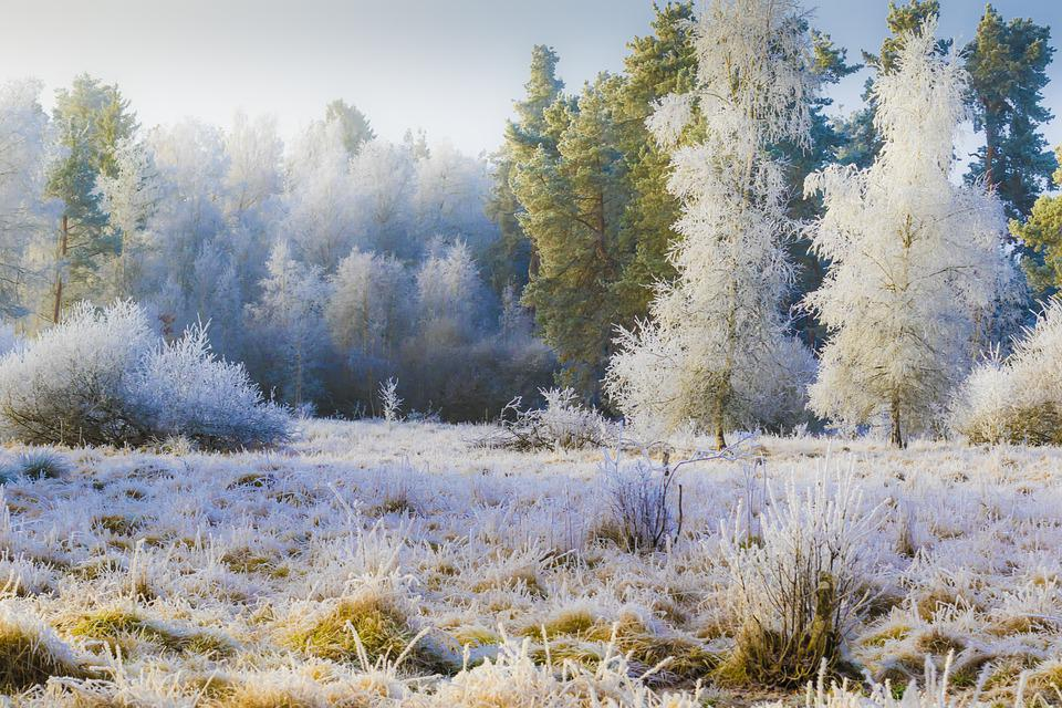 Hoarfrost, Rimer, Cold, Frost, Icy, Magic Forest