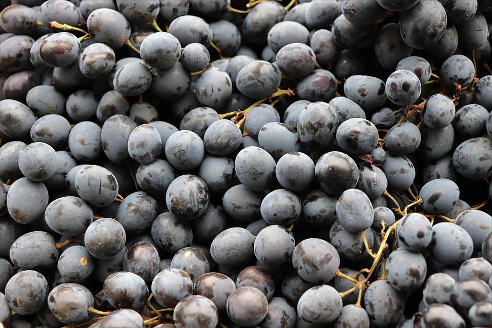 黒ぶどう, フルーツ, 健康, ジューシーです, ビタミン, 甘い, おいしい, 菜食主義者, 栄養