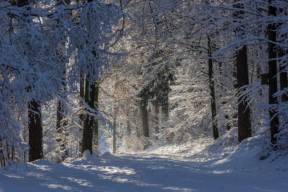Forest (Winter) – Pixabay – Sonyuser