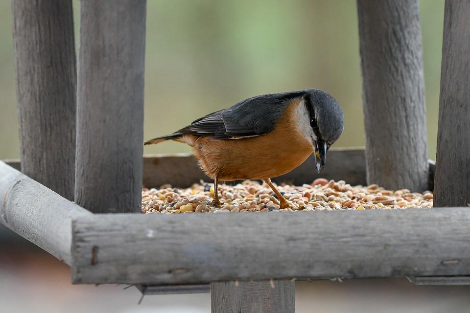 Boomklever Vogel Voederhuisje - Gratis foto op Pixabay