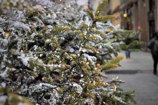 Christmas Tree, Lights, Street