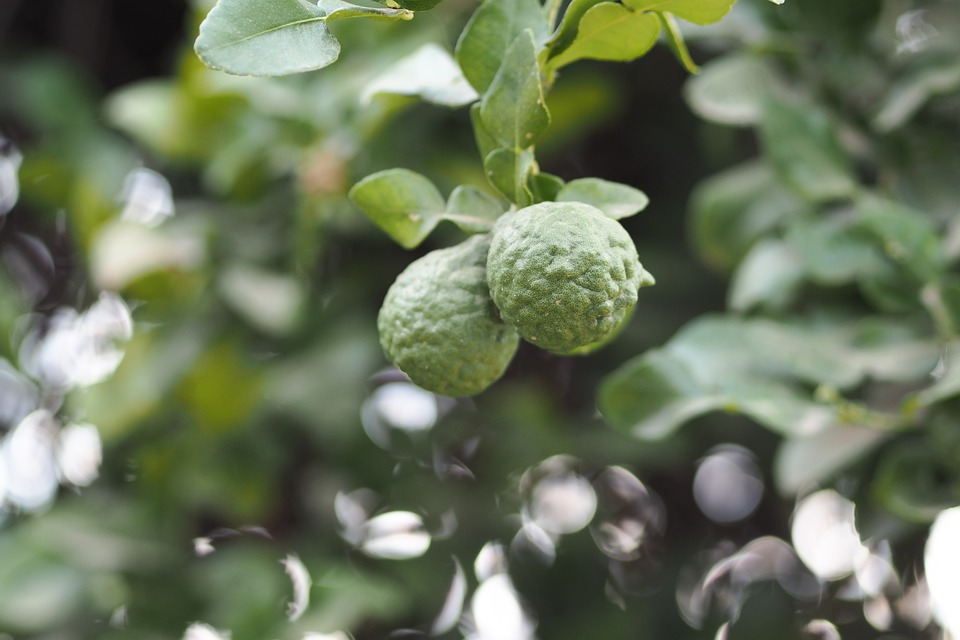 """Résultat de recherche d'images pour """"bergamote"""""""