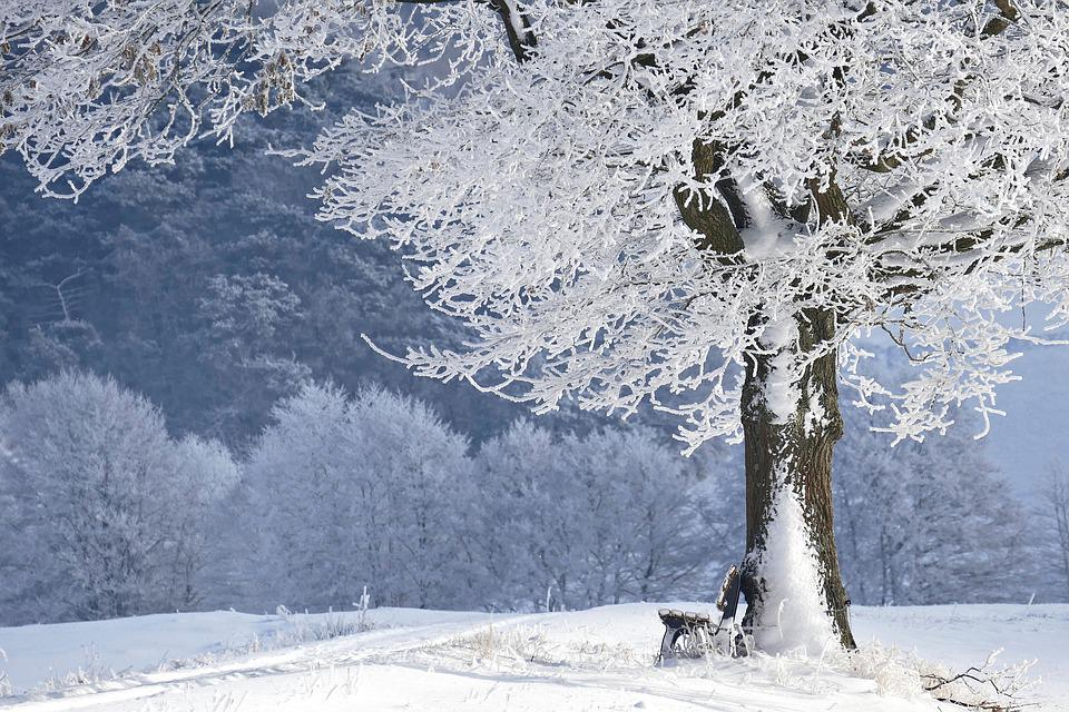Winter, Tree, Bank, Nature, Snow, Wintry, Forest