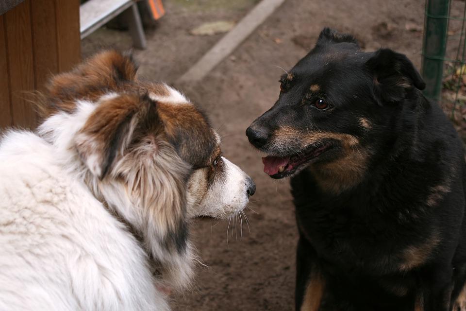 会話, 犬, 友情, 対決, ビュー, の重視, 時計, 再生, カップル, 2, ヤード, ホワイト
