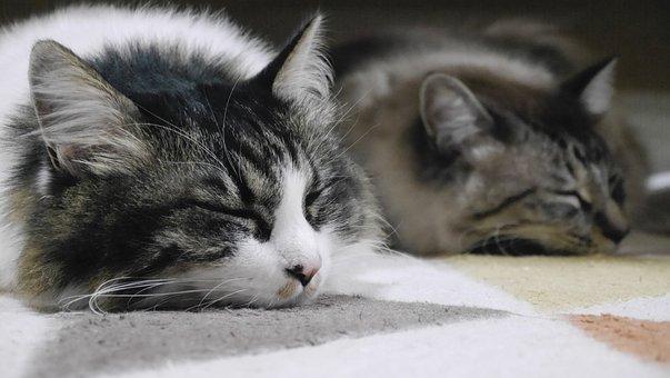 Kucing, Santai Saja, Tidur