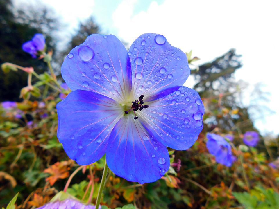Bellissimo Fiore Natura - Foto gratis su Pixabay