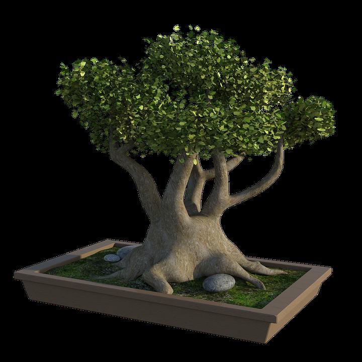 Bonsai Tree Rocks Grass Free Image On Pixabay