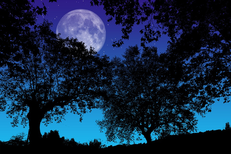 The Night Full Moon Trees - Free image on Pixabay