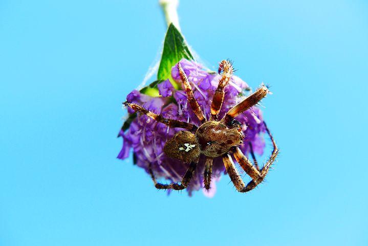 цветочный паук картинка такое никто