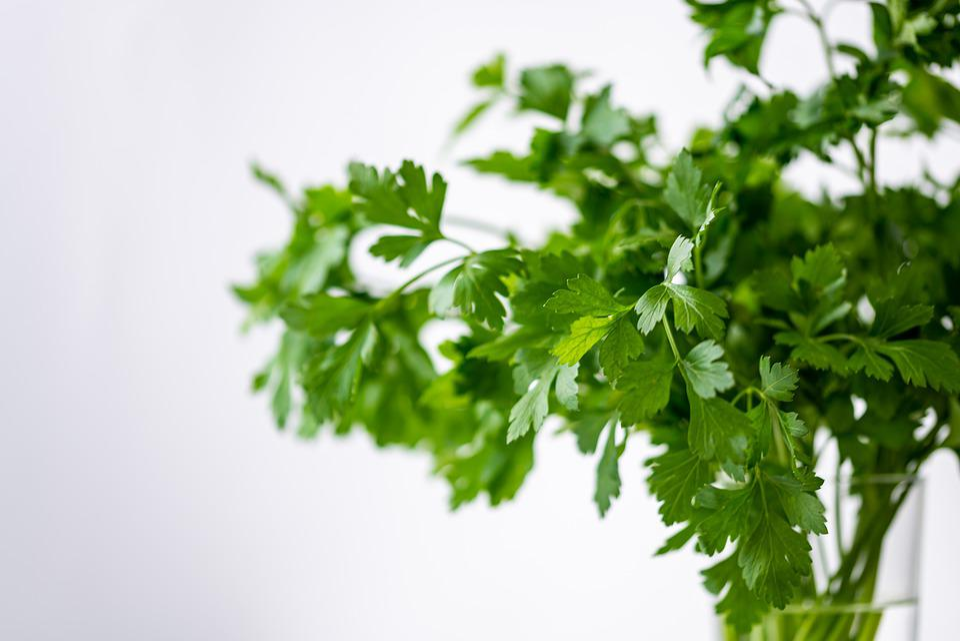 パセリ, 緑, 健康, 食べる, 植物, 食品, 新鮮, 野菜, ハーブ, おいしい, バイオ, ビタミン