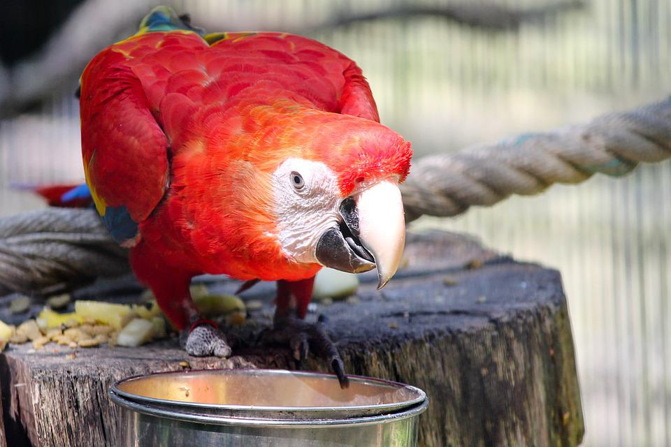 Ara, Papegaai, Licht Rood, Vogel, Kleurrijke