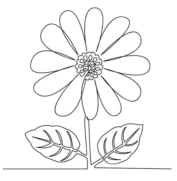 Bunga Matahari Daun Batang Foto Gratis Di Pixabay