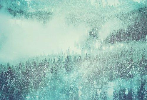 Erdő, Astronaut, Hó Táj, Télies
