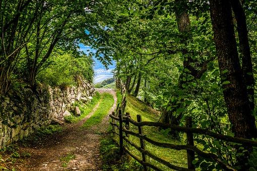 Forest Path, Romantic, Deciduous Forest