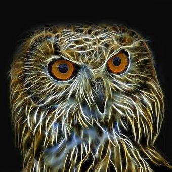 owl 4697375 340