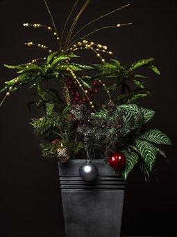 Christmas, Flowers, Winter, Celebration