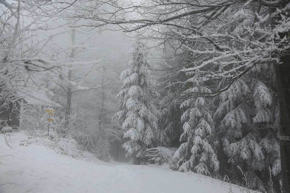 Winter, Forest, Snow, Nature, Trees, Landscape