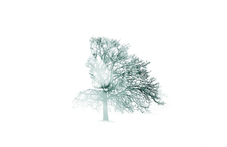 Tree, Girl, Smile, Women, Fantasy, Trees, Forest