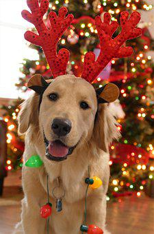 Christmas, Dog Christmas, Dog, Cute