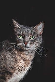 Katze, Grünen Augen, Haustier, Tier