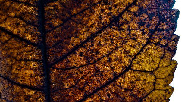 Autumn, Leaf, Background, Decomposition